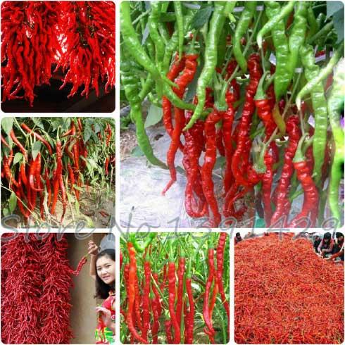Семена красного перца на АлиЭкспресс
