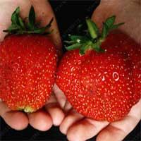 Купить семена на АлиЭкспресс