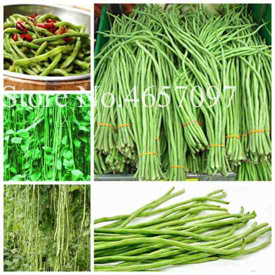 Китайская стручковая фасоль Вигна Купить семена с Алиэкспресс