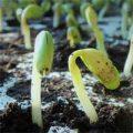 Выращивание рассады товары на Aliexpress