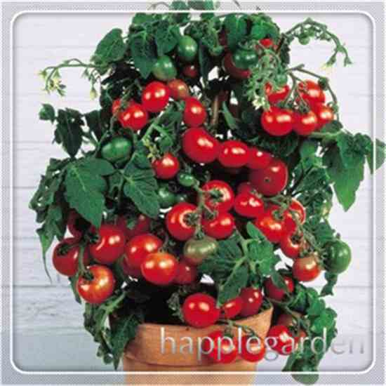 Семена томатов Купить семена на Aliexpress
